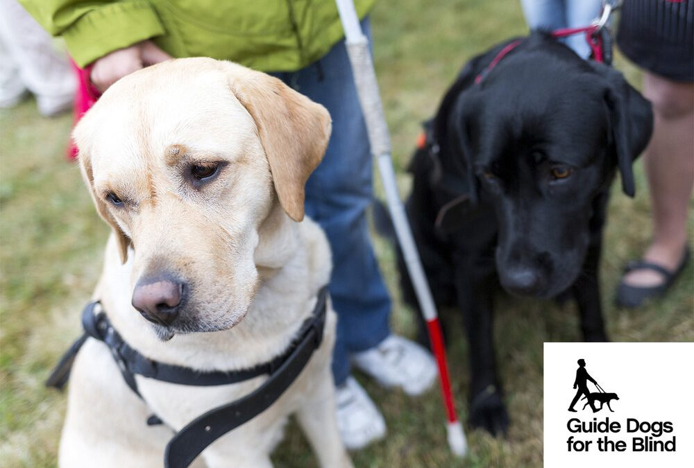 Act 1 Partners is Proud to Support Guide Dogs for the Blind